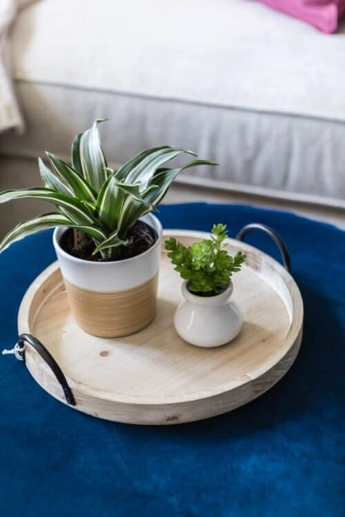 two potted plants wooden tray blue ottoman white sofa